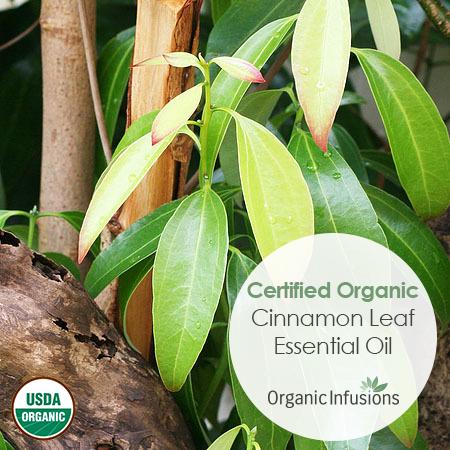 Cinnamon Leaf Essential Oil   oils   Cinnamon essential oil