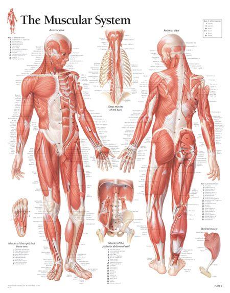 1100N.jpg (450×573) | drawing references | Pinterest | Anatomy ...