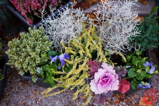Composizioni floreali per le fioriere invernali - Piante terrazzo autunno ...