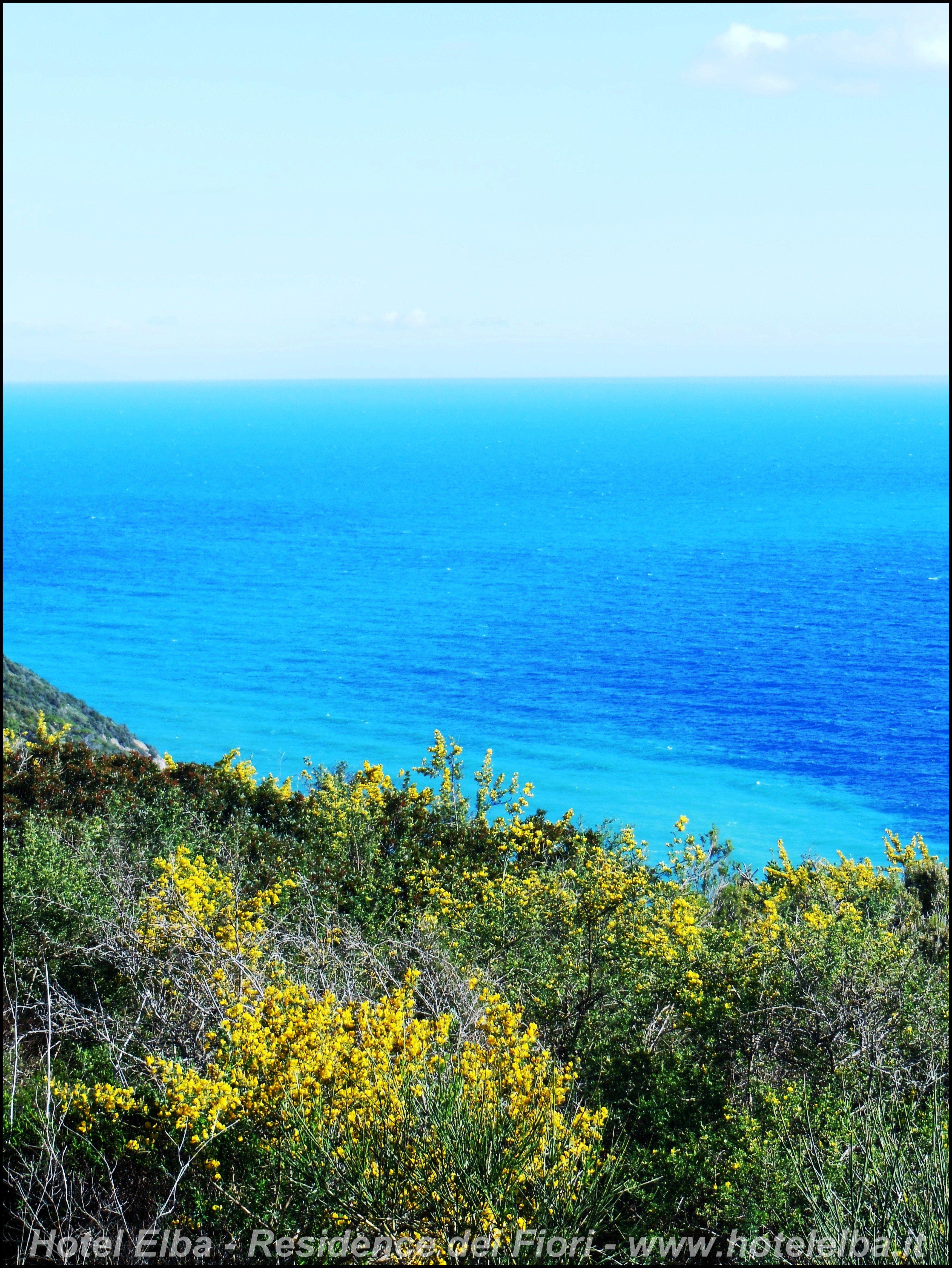 Isola d'Elba Fioritura di Primavera Ginestra Tuscany
