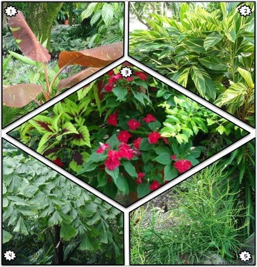 Free Plant Identification Plants, Tropical plants, Free
