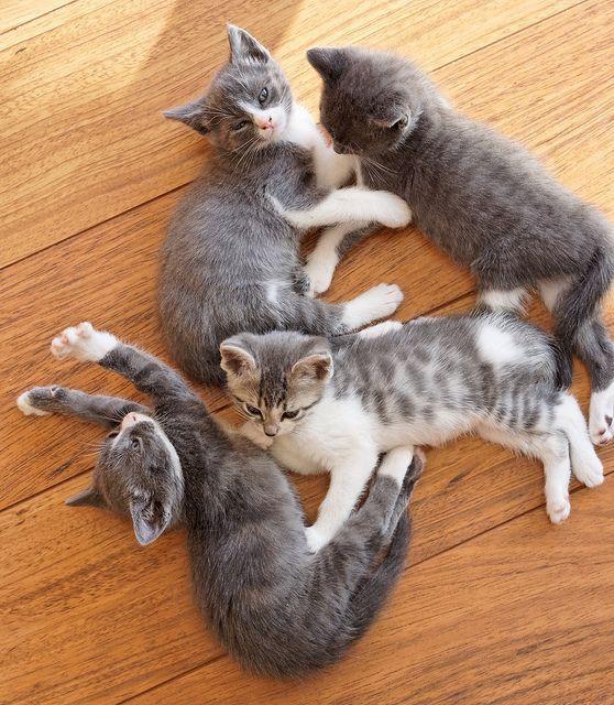 Vackra små kattor