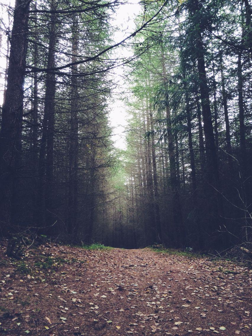 Forest || villro.tumblr.com