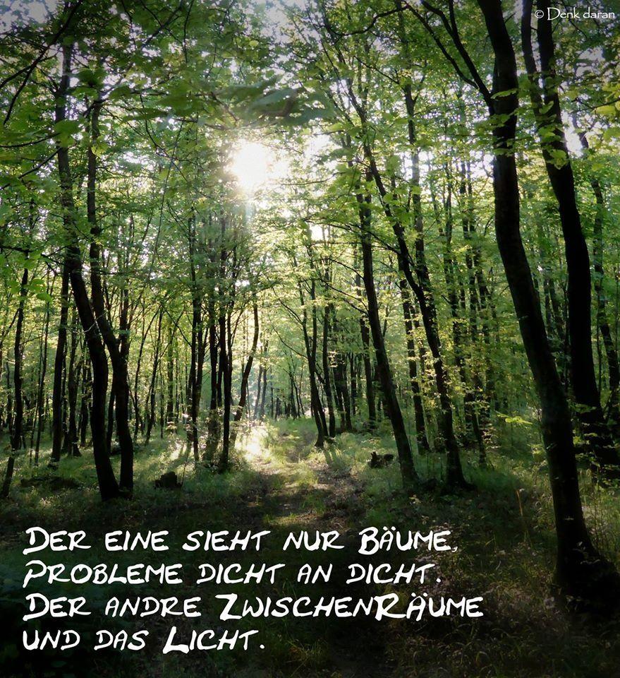 schöne sprüche über bäume