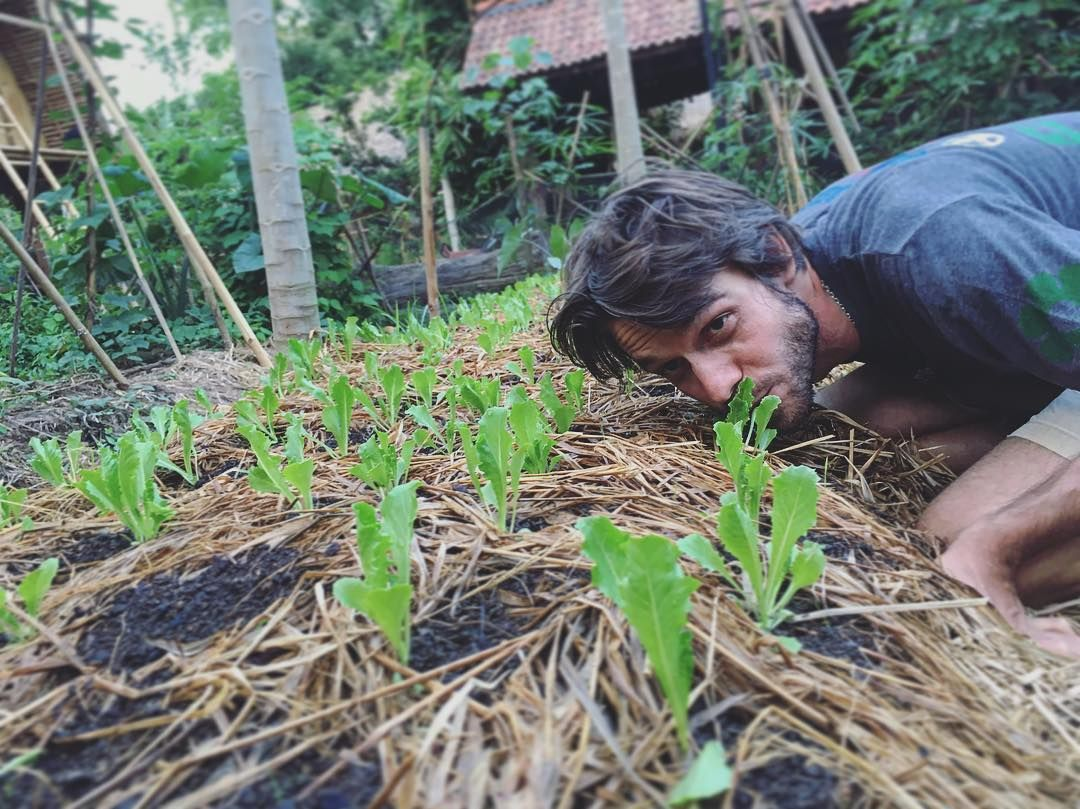 A goat got into the garden and cant keep his mouth off our baby lettuce @kulkulfarm. Edible Gardens indeed with @orinjus. We're open today for our usual garden shenanigans- we're talking raising good seeds for delicious veggies. #ediblegarden #balifarm #permaculturebali #groworganic #balifarming #balifoodie #organiclettuce by kulkulfarm