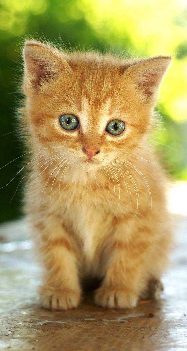 Rotes Kätzchen - #katzchen #rotes - #Juliet'sKatzenundKätzchen #gingerkitten