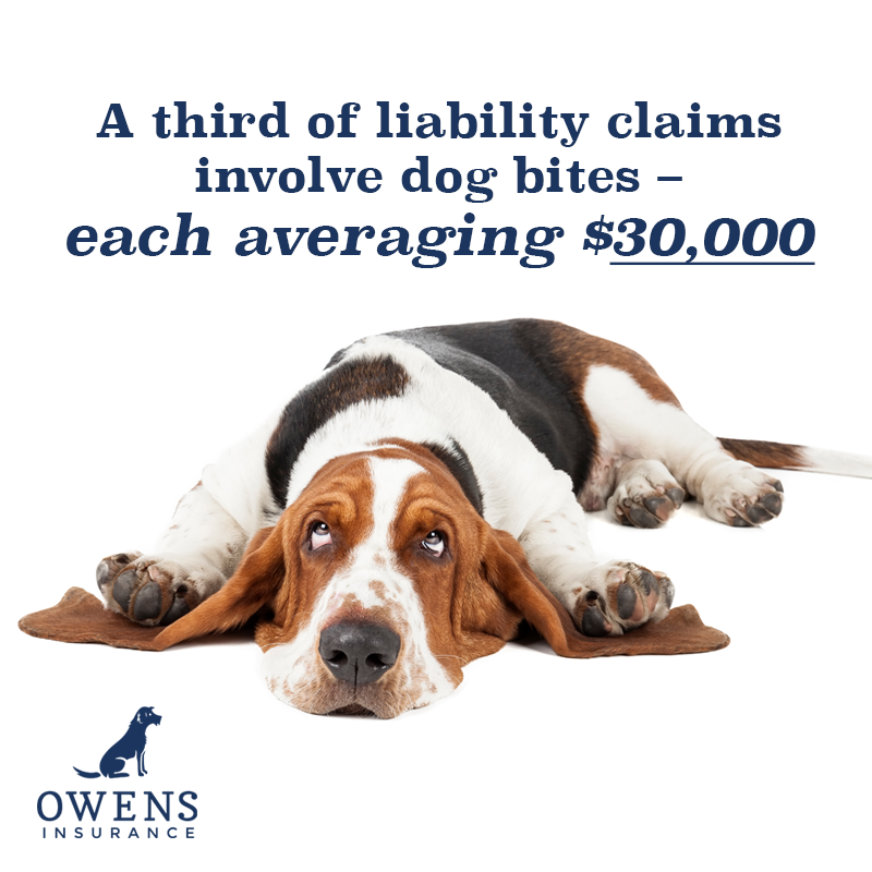 Did You Know Dog Bites Account For A Third Of All Liability Claims Each Averaging 30 000 For This R With Images Group Insurance Dog Biting Commercial General Liability