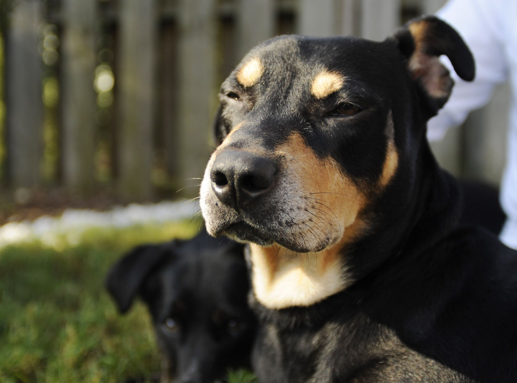 Dog named lazarus survives euthanasia attempt dog