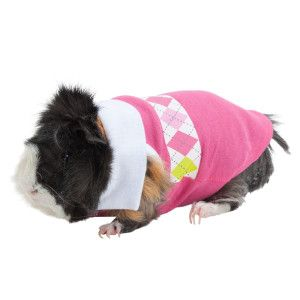 All Living Things Argyle Small Animal Polo Costumes Petsmart