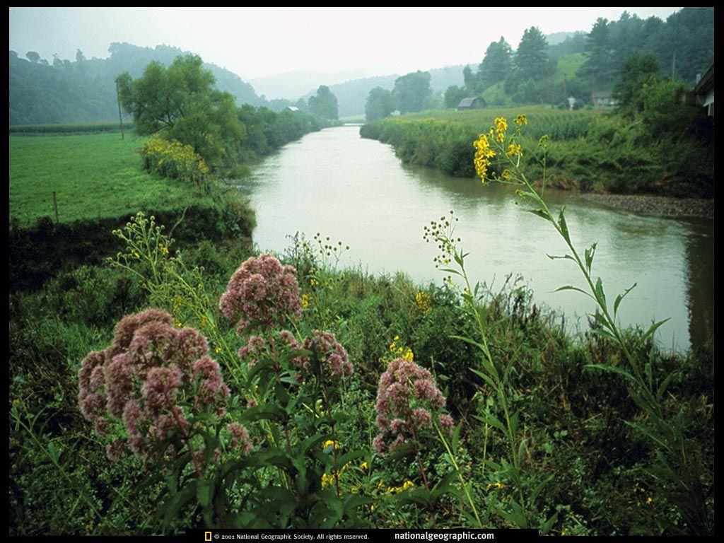 Desktop papeis de parede - Flora selvagem: http://wallpapic-br.com/national-geographic-fotos/flora-selvagem/wallpaper-38077