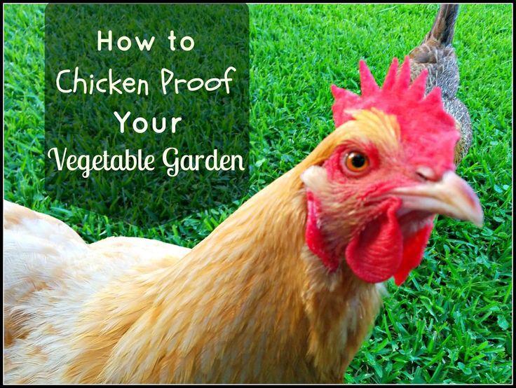 Chickens Vegetable Garden Part - 41: Greneaux Gardens: How To Chicken Proof A Vegetable Garden