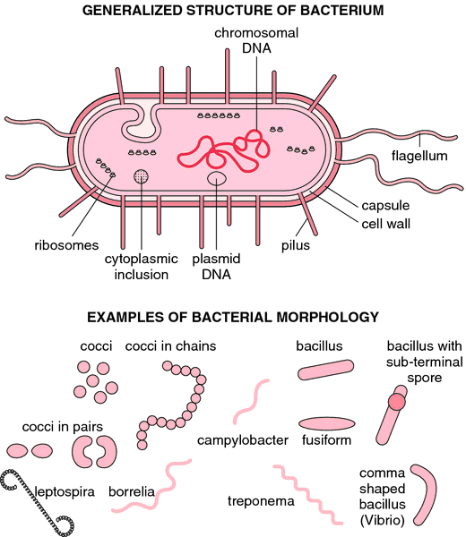a basic description of microbiology a branch of science Here are the different branches of biology (or divisions of biology) and their  definitions also find related sources for each sub-discipline or fields of biology.