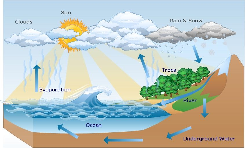 Hydrology Assignment Help   Water cycle, Water cycle project, Water cycle  diagram