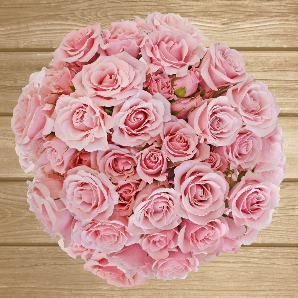 Spray Roses 40cm -Pack 120 stems   Carnation, Peony and Centrepieces