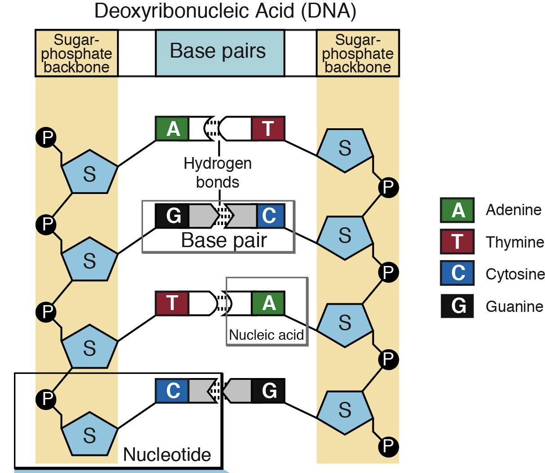 Nucleotide 2 Genetics Generation