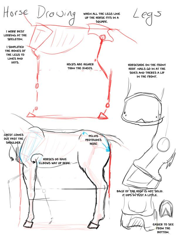 Horse_Drawing__Legs_by_modesty, how to draw a horse, drawing horses ...
