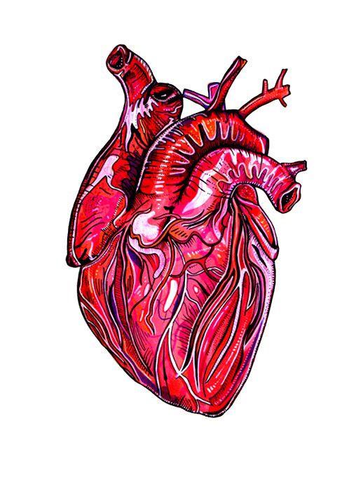 Картинки сердца человека живое
