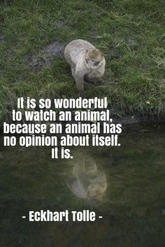 eckhart tolle quotes | Animal quotes and animals lovers' quotes