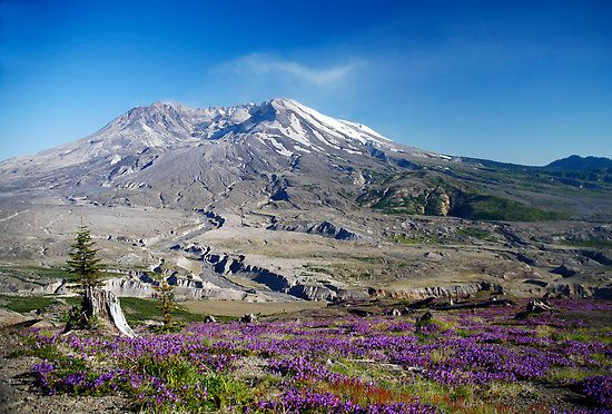 Mount St. Helens....I've always been fascinated by this beautiful mountain and its history.