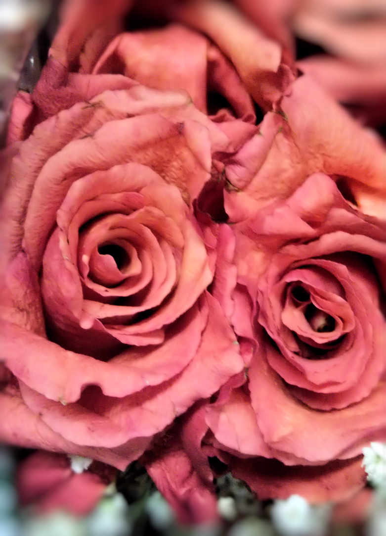 Paper Like Rose Beautiful Paper Pinterest Rose Flowers And