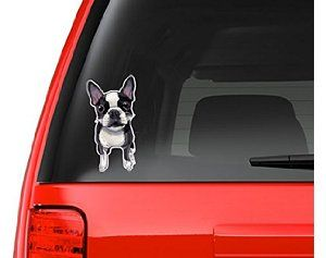 Boston Terrier Full Color Art Vinyl Auto Decal Sticker or any Smooth Surface