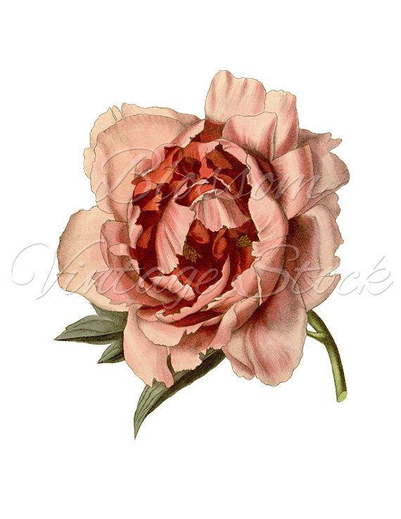 Pin By Nineni On Vintage Art Style Pinterest Flower Clipart
