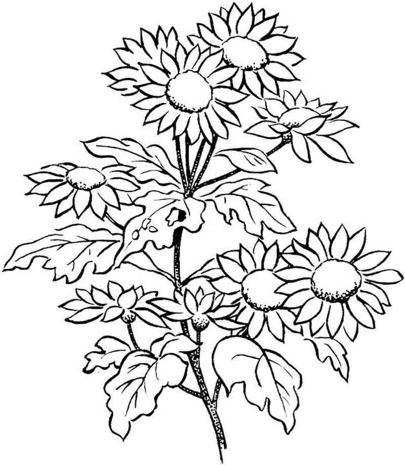 Print Flower Coloring Pages For Adults from Flowers Coloring Pages ...