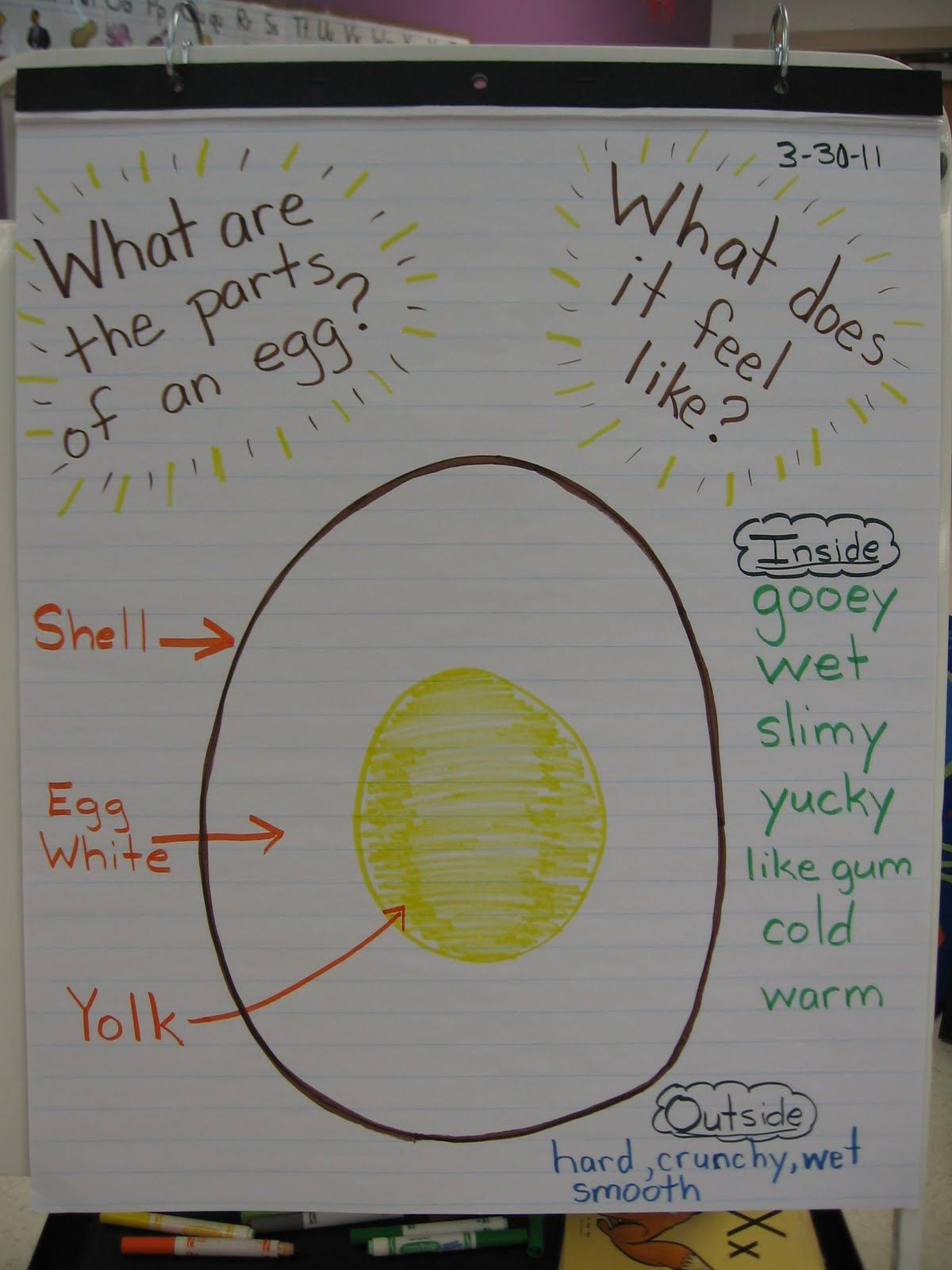 Today We Labeled The Parts Of An Egg And Took A Closer