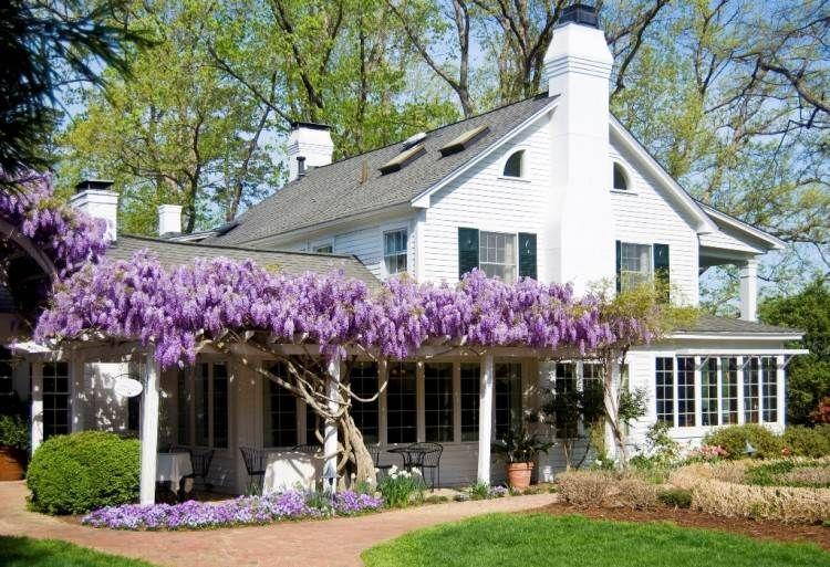 Plantes Grimpantes Pour Pergola 20 Idees Romantiques Jardin