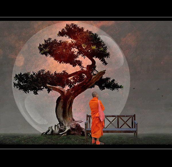 Bonsai Monk by H.Kopp-Delaney   Buddhist art, Buddhist artwork, Bonsai