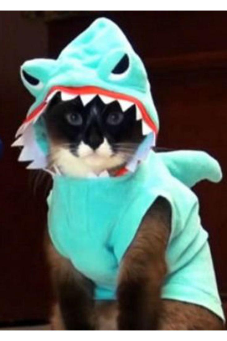 Quatang Gallery- Deguisement Animaux Deguisement Pour Chat Requin Deguisement Pour Chat Deguisement Animaux Deguisement Chat