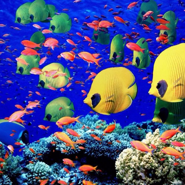 Pin By Chelsea Tangen On Places To Go Colorful Fish Ocean