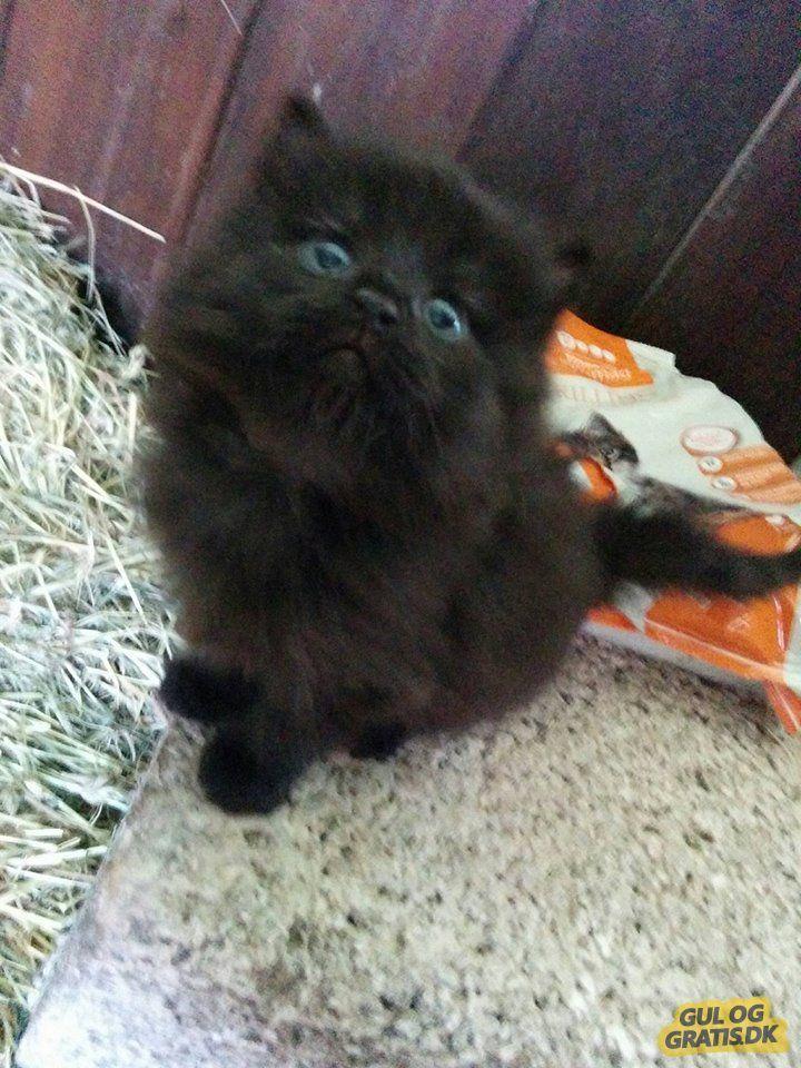 kitty <3