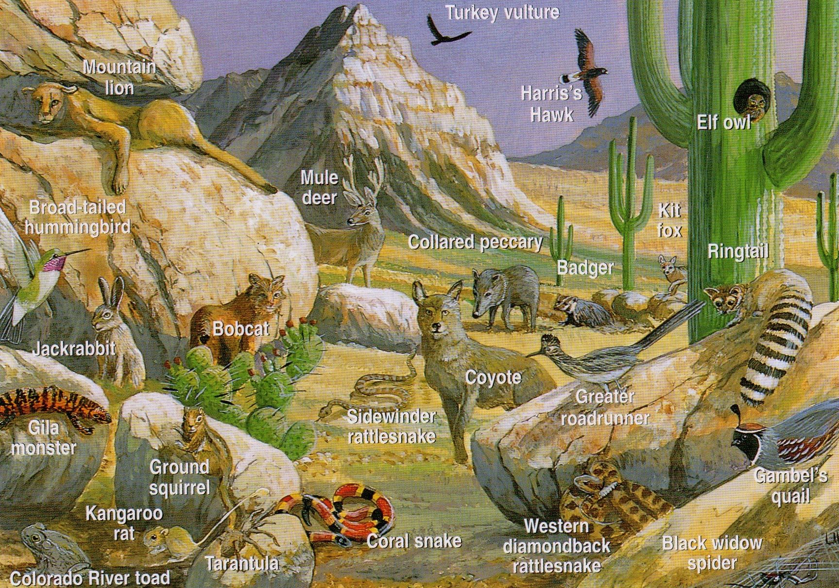 Pin By Sunny On First One Desert Animals Desert Biome Desert Ecosystem