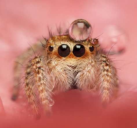 Pin on Spidery Goodness