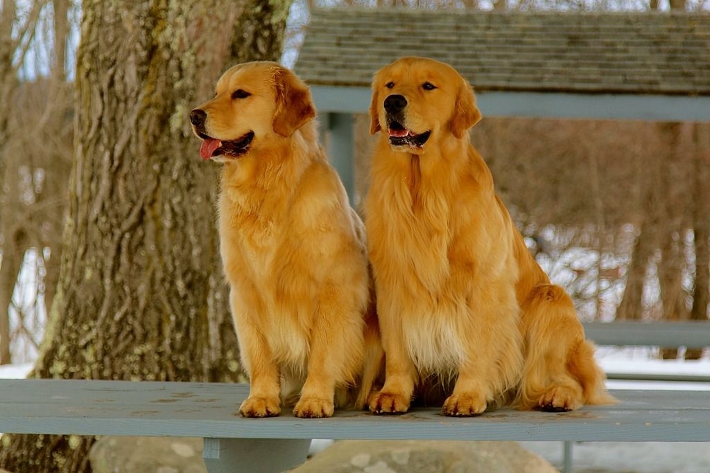 Www Poeticgold Com Gch Harborview Sweeter Than Shine At