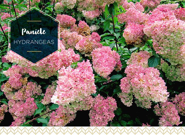 Types of Hydrangeas: A Visual Guide - Fresh by FTD