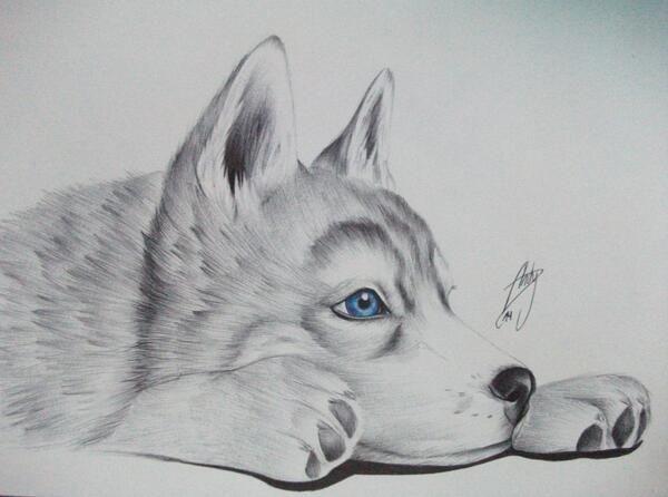 Dibujos de Husky Siberiano - Imagui   Colored Pencil Art   Pinterest ...