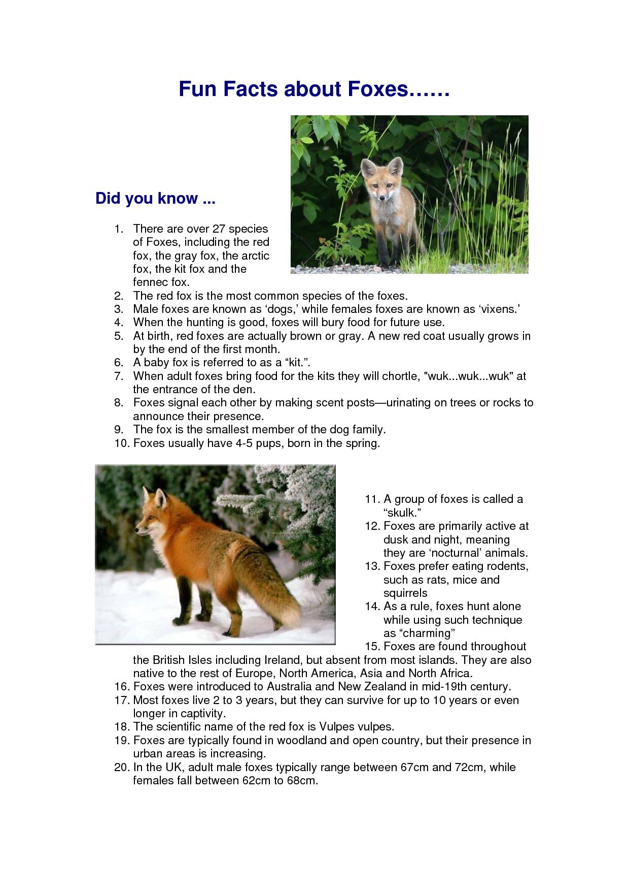 Red Fox Fun Facts Fun facts, Fox facts, Red fox