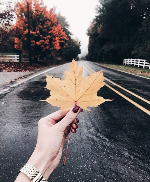 Image about photography in autumn vibes 🍁 by n u r i j a ♡