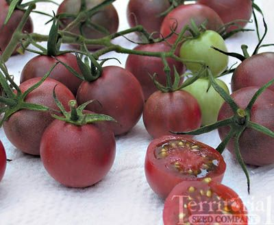 These are on my list for growing this Season...they look amazing!!  Can't wait to try them!