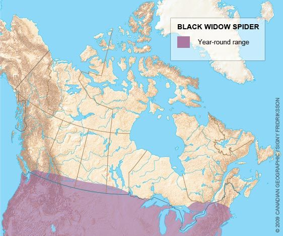 Range map for the Black widow spider | Wildlife of BC | Pinterest