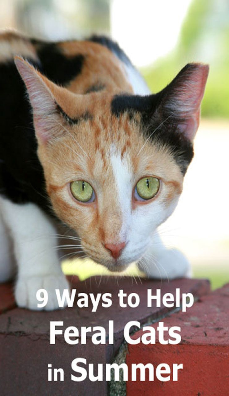 How To Help Feral Cats During Hot Summer Months Cat