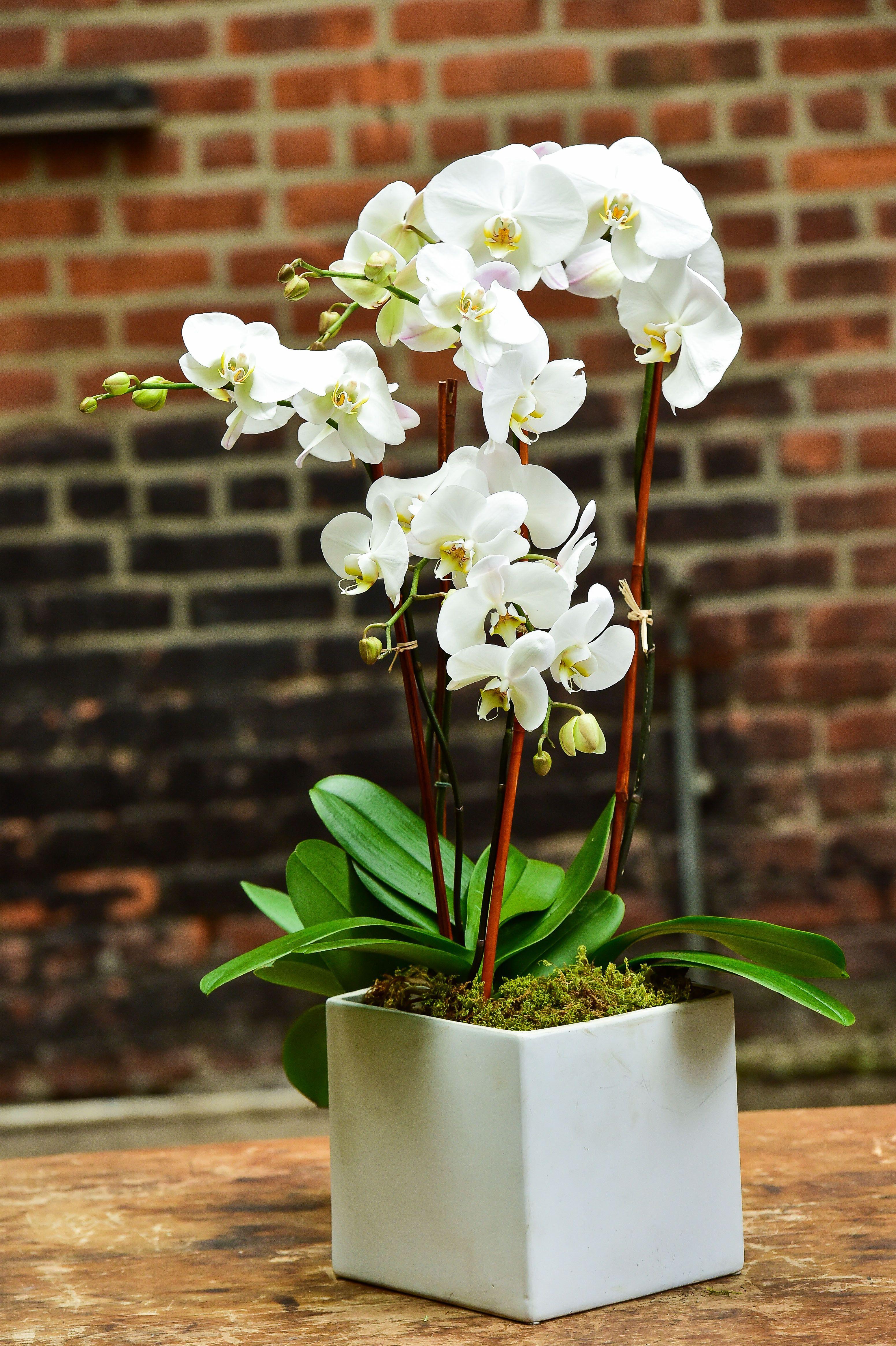 Triple White Modern Orchids Arrangements Orchid Delivery Faux Floral Arrangement