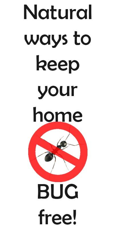 Natural ways to keep your home bug free spider fly natural and diy ideas natural ways to get rid of ants spiders ccuart Choice Image