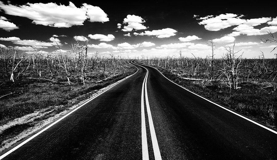 500px / Photo Burned Trees (Mesa Verde) by Jimmy De Taeye