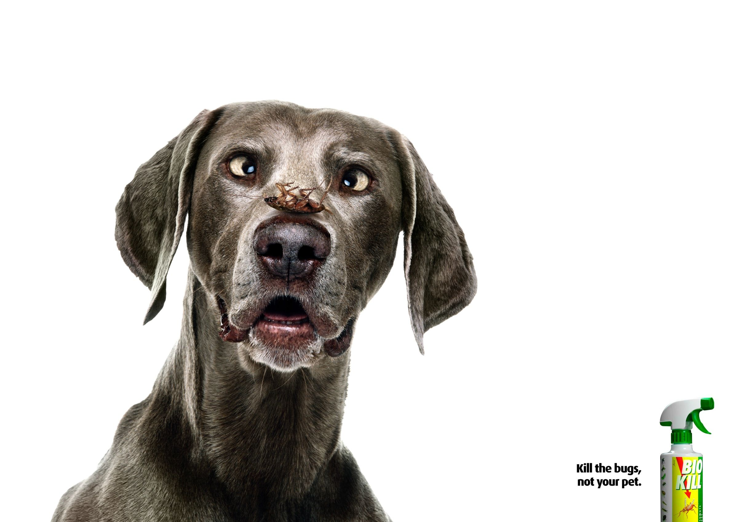 converse shoes advertisement appeal to fear commercials with dog