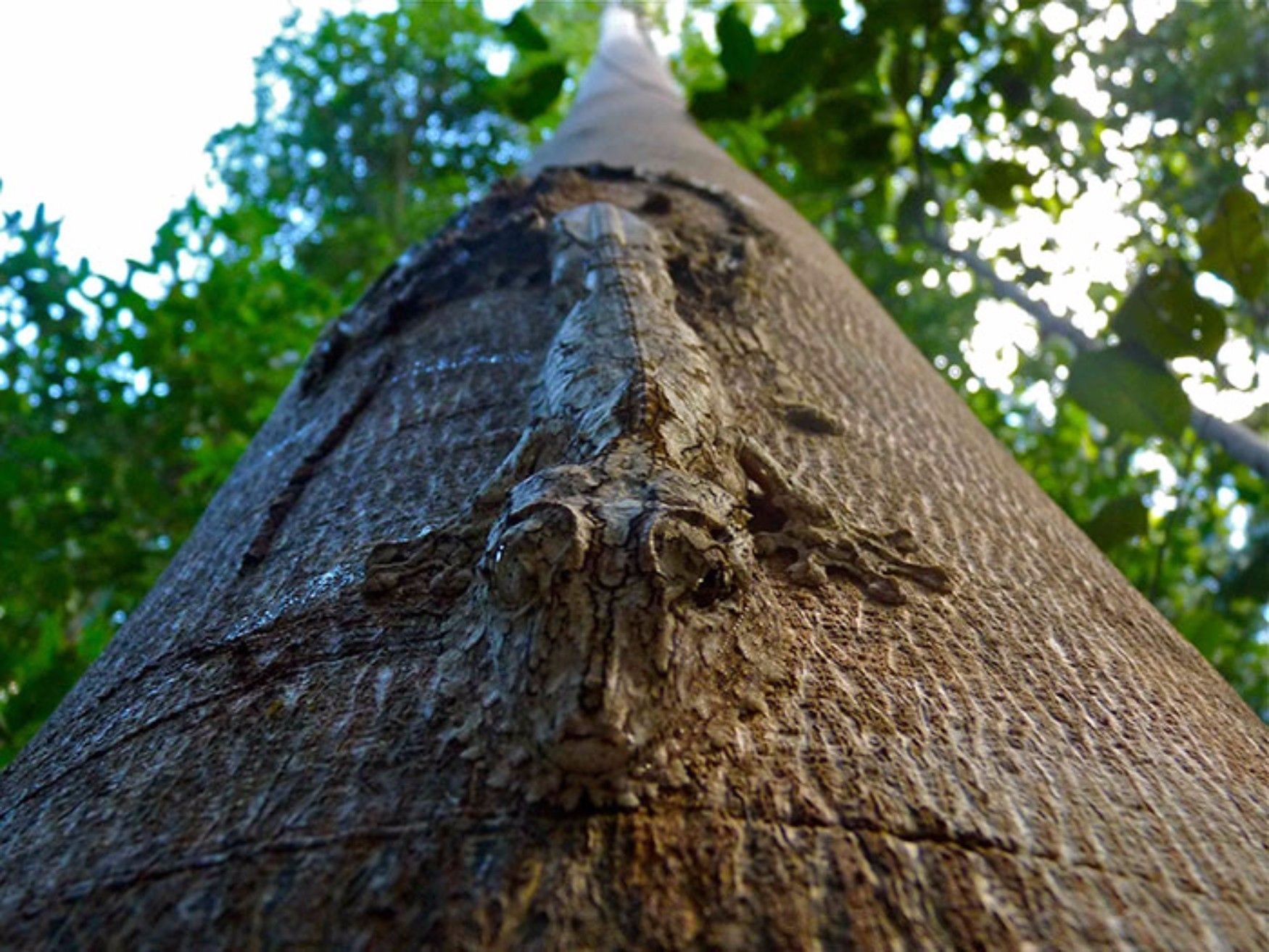 Can You Spot These Camouflaged Animals Gecko Animal Photography Animals