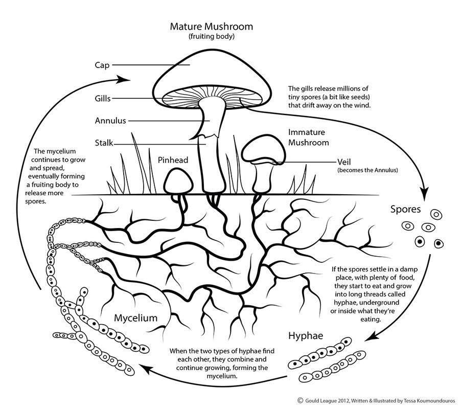 Fungi Diagrams For Kids Wire Data Schema