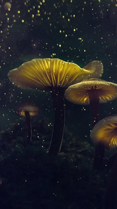57 3d Mushroom Wallpapers On Wallpaperplay Mushroom Wallpaper Stuffed Mushrooms Wallpaper Free Download